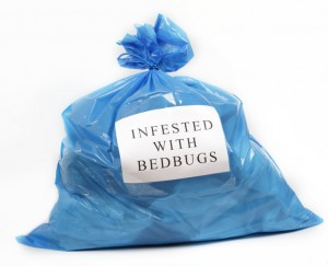iStock 000015988333Small 300x243 photo (vapor steam cleaners bed bugs green building )