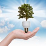 Light bulb in hand (green tree growing in a bulb)