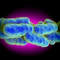 Up in Arms: Legionella Found in Unlikely Places