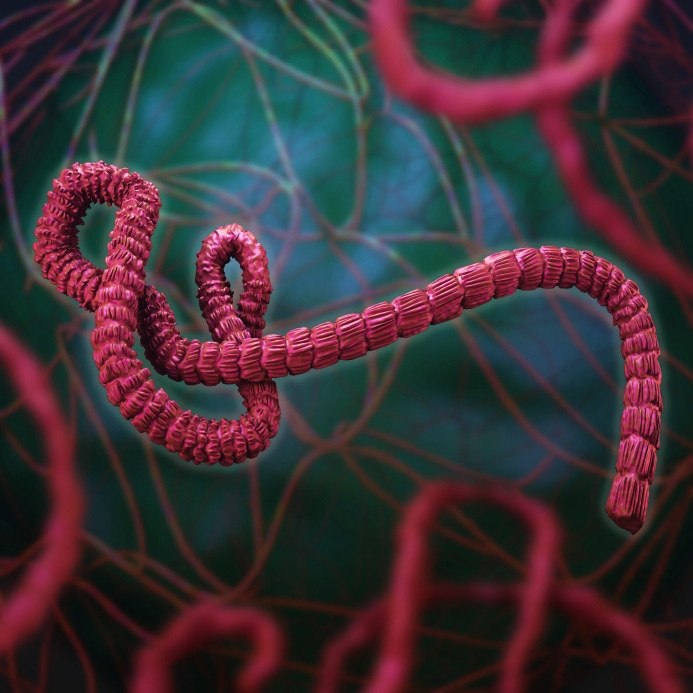 Ebola Control: Containing the Contagion