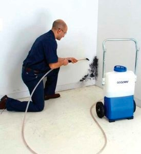 The Cost of Delaying Mold Prevention and Treatment